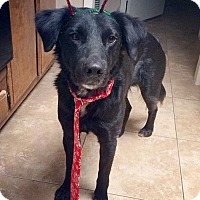 Adopt A Pet :: Titan - Anaheim, CA