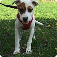 Adopt A Pet :: Holly - 17 lbs - Warwick, NY