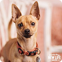 Adopt A Pet :: Bax - Portland, OR