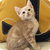 Adopt A Pet :: Bumper Car - Addison, IL