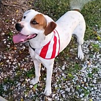 Adopt A Pet :: Rizo - Lake Placid, FL