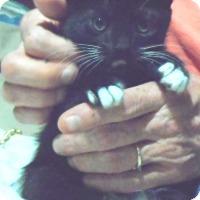 Adopt A Pet :: Lacey - Pensacola, FL