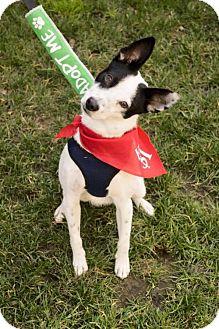 Border Collie Mix Dog for adoption in Sacramento, California - Jack