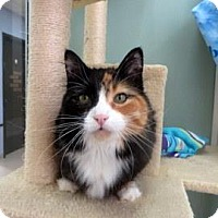 Adopt A Pet :: Greta - Janesville, WI