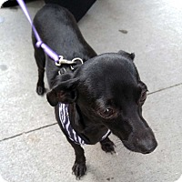 Adopt A Pet :: Balthazar! - New York, NY