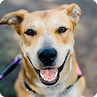 Adopt A Pet :: Eloise - Los Angeles, CA