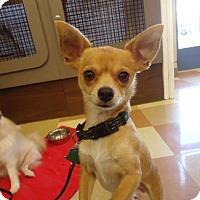Adopt A Pet :: Paloma - Berkeley, CA