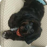 Adopt A Pet :: Chloe - Oberlin, OH