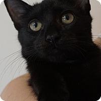 Adopt A Pet :: Acadia - Bethesda, MD