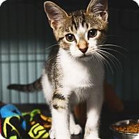 Adopt A Pet :: Buddy - Tomball, TX