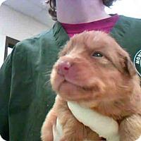 Adopt A Pet :: BEAN - Conroe, TX