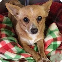 Adopt A Pet :: Tikai - Chico, CA