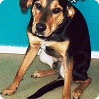Adopt A Pet :: *Junior - Winder, GA