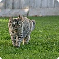 Adopt A Pet :: Punkin - Modesto, CA