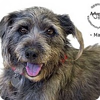 Adopt A Pet :: Marty - Phoenix, AZ
