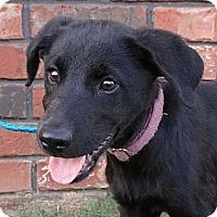 Adopt A Pet :: *Dexter - PENDING - Westport, CT