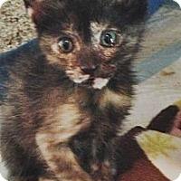 Adopt A Pet :: Karmin - Harvey, LA