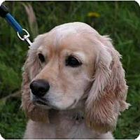 Adopt A Pet :: Blue - Rigaud, QC