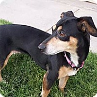 Adopt A Pet :: Gracy - Alamogordo, NM