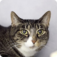 Adopt A Pet :: Tadpole - Chicago, IL