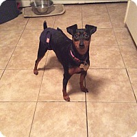 Adopt A Pet :: Haley - Malaga, NJ