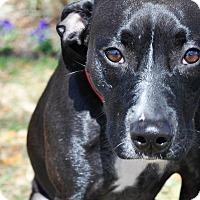 Adopt A Pet :: Zira - Gainesville, FL