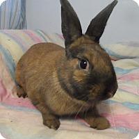 Adopt A Pet :: Martin - Hillside, NJ