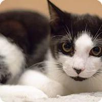Adopt A Pet :: Baxter - Tampa, FL