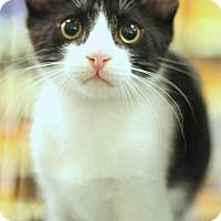 Adopt A Pet :: Forest - Sacramento, CA