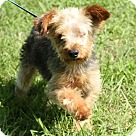 Adopt A Pet :: Gimli (POM-CD)
