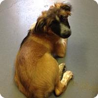 Adopt A Pet :: Kita - Meridian, ID