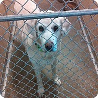 Adopt A Pet :: Savannah - Mount Carroll, IL