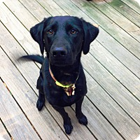 Adopt A Pet :: Bailey (Savannah) - Cumming, GA