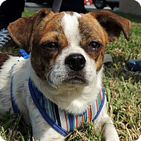 Adopt A Pet :: Sammy - Humble, TX