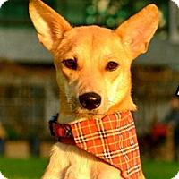 Adopt A Pet :: Anya - Surrey, BC