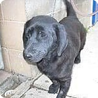 Adopt A Pet :: Fred - Rexford, NY
