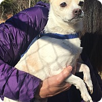 Adopt A Pet :: Stride - Bloomfield, CT