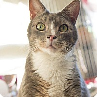 Adopt A Pet :: Bandit - Windsor, CT