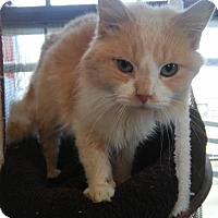 Adopt A Pet :: MARSH! - Owenboro, KY