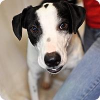 Border Collie Mix Dog for adoption in Tanner, Alabama - Mamie