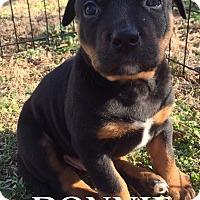 Adopt A Pet :: Donnie - Batesville, AR