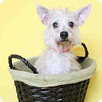 Adopt A Pet :: Crystal - Los Angeles, CA