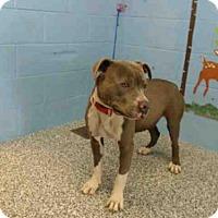 Adopt A Pet :: A491445 - San Bernardino, CA