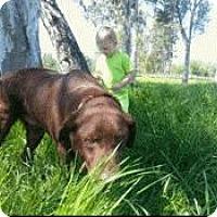 Adopt A Pet :: Ruger - Incline Village, NV