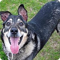 Adopt A Pet :: Buddy Boy - Troy, MI