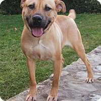 Adopt A Pet :: Jezzie - Enfield, CT