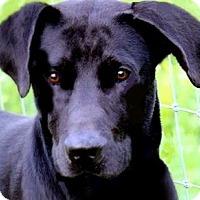 Adopt A Pet :: WALKER(FUN-HAPPY-SO SMART! - Wakefield, RI