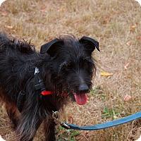 Adopt A Pet :: Tex - Batavia, NY