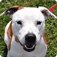 Adopt A Pet :: Sheila - Lisbon, OH
