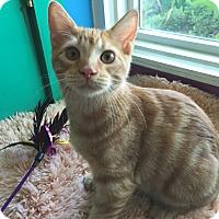 Adopt A Pet :: Deuce - Topeka, KS